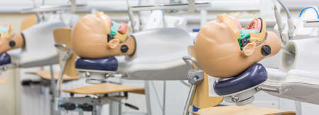 Close-up of anatomical models head for students practice on dentistry course