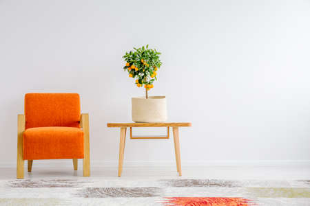 Small tangerine tree in canvas cover on wooden table next to orange chair Фото со стока