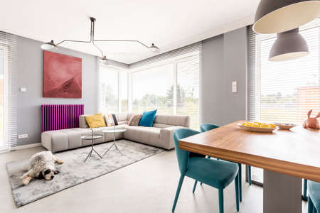 Contemporary living room for family with gray walls, beige corner sofa, big windows, painting, purple radiator and blue chairs in dining area Imagens