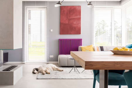 Light beige couch, table, fireplace, artwork, bright windows and purple accent in contemporary living room with dog sleeping on the rug Foto de archivo