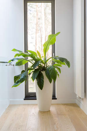 Cropped shot of a houseplant standing next to the narrow window 版權商用圖片
