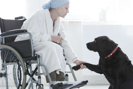 Dog Giving Paw Disabled Woman Sitting With Dressing-gown In ...