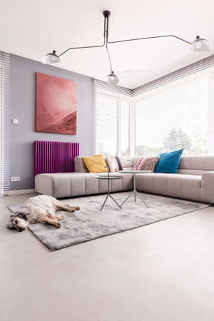 Cozy living room with a purple radiator, an abstract painting above it and giant windows shedding light on a dog lying on a soft carpet by a large sofa