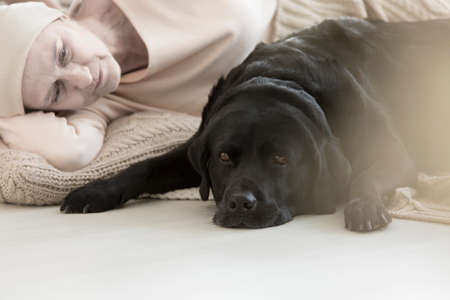 Black dog lying by its owner sick with cancer strengthening their bond, and participating in pet therapy Stock Photo