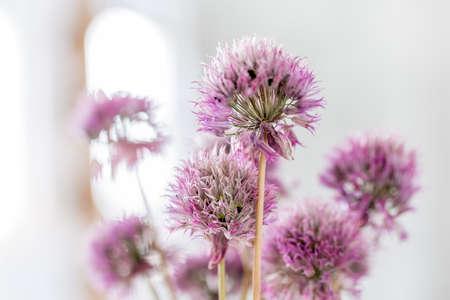 ぼやけた背景に対する紫色のクローバーの花のクローズアップ