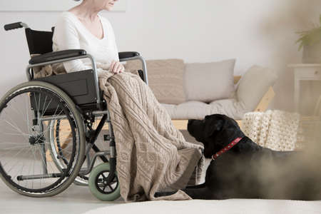 Cancer patient on a wheelchair overcoming tumor with her dog during pet therapy Stock Photo