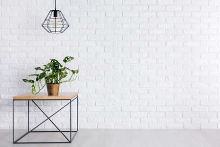 Fresh green potted plant standing on square table in room with empty brick wall Reklamní fotografie