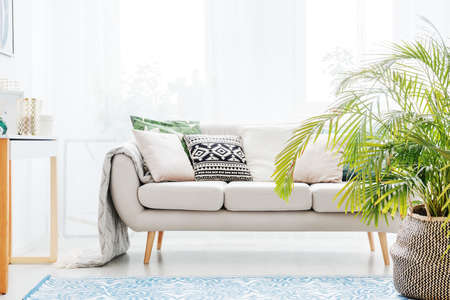 Plant next to beige sofa with bright cushions in living room with blue carpet