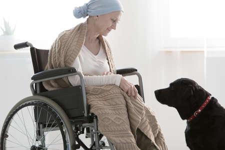 종양학 병동에서 여성을 돕는 검은 개는 애완 동물 치료를 통해 더 좋아집니다. 스톡 콘텐츠