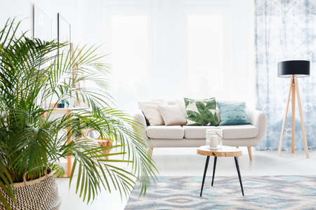 Plant in bright living room with wooden table on a carpet and lamp next to a sofa with floral pillow