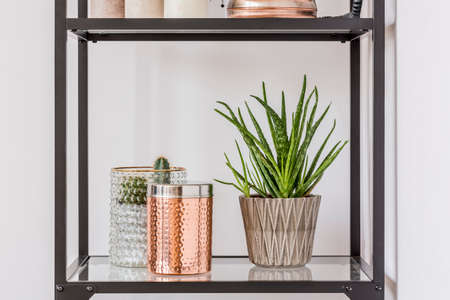 Close-up of aloe plant in patterned pot and copper box on glass shelf
