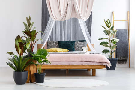 Plants and white round rug in front of canopied bed in pastel bedroom interior with ficus tree and ladder