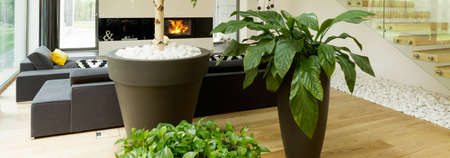 Close-up of green plants in vases in stylish new living room. In the background comfortable couch and fireplace