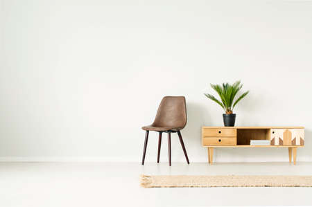 Plant in black pot on wooden cupboard next to brown chair against empty wall in simple living room interior with rug Stok Fotoğraf