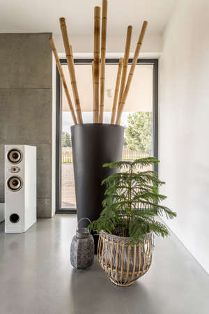 Tree In Braided Basket Next To Vase With Bamboo Sticks In Living