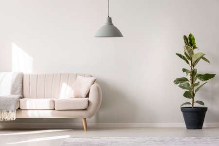 Grey lamp and ficus near beige settee with pillow and blanket in white living room interior with copy space Stok Fotoğraf