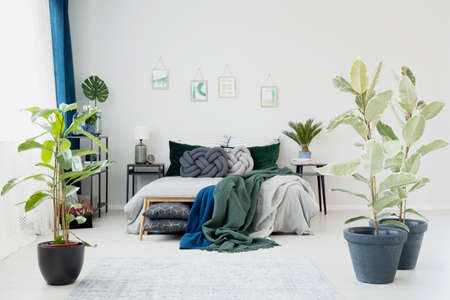 Ficus in bright bedroom interior with blue and green blanket on bed against a wall with posters