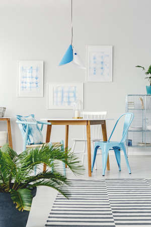 Palm and patterned carpet in dining room interior with blue chairs at wooden table against the wall with posters