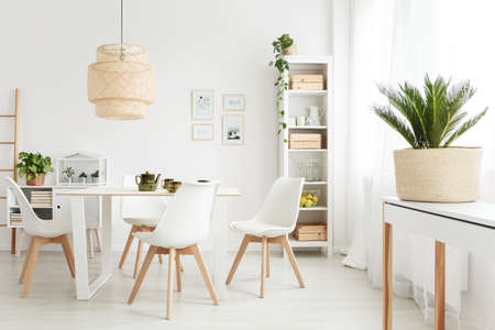 Palm plant on white console table standing near the window in bright dining room interior with plastic chairs