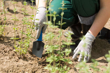 Close-up of gardener in protective gloves cultivating soil with garden spade