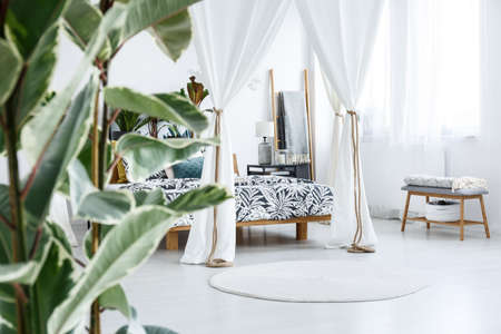 Close-up of blurred ficus plant leaves in botanic bedroom interior with canopy tied with rope Foto de archivo