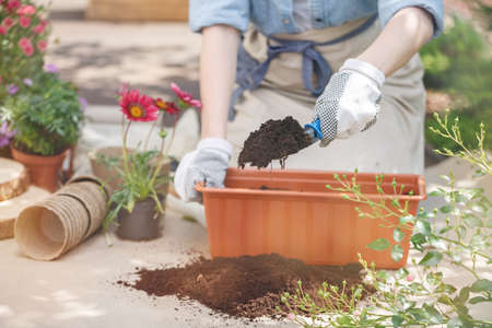 Close-up of gardeners hands, filling a long plastic flower pot with black soil
