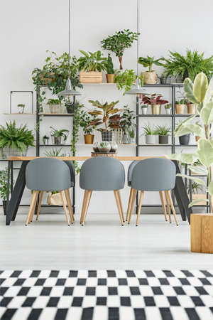 Checkered, black and white rug in bright dining room interior with wooden table, gray chairs and plants Stock Photo