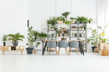 Bright, spacious dining room interior with gray chairs at a wooden table and lots of plants