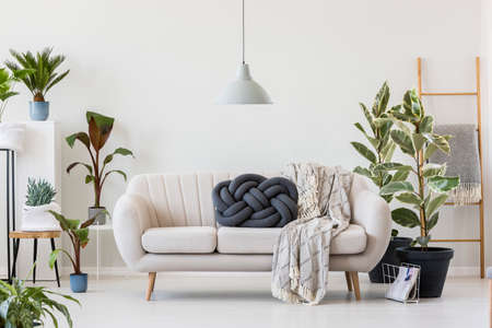 Dark knot pillow and blanket on a white sofa standing next to large ficus plants in living room interior