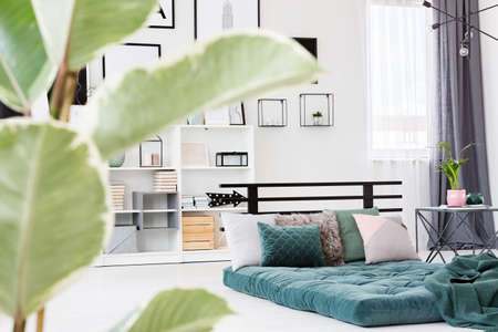 Modern bedroom interior with green mattress and pillows lying on the floor. Blurred ficus leaves in the foreground