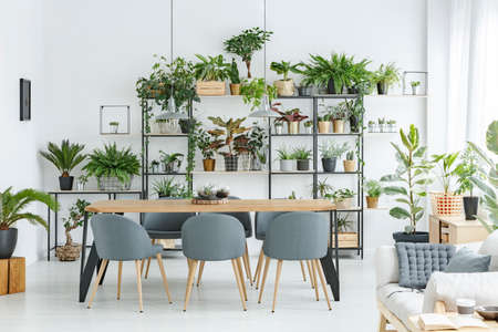 Open space apartment interior with lots of plants, beige sofa and dining area
