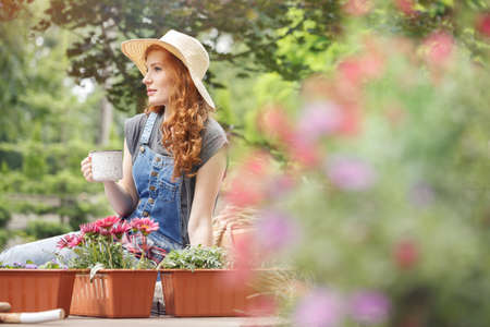 Pretty woman in straw hat on her head drinking tea on terrace, sitting next to containers with red flowers