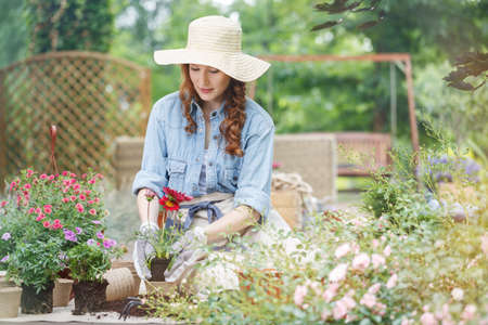 Pretty woman in a straw hat on her head, planting red flowers during gardening work on terrace