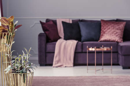 Golden flowerpots with plants and blurred, purple sofa with cushions in the background of living room interior