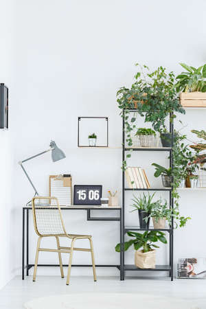Gold chair at desk with lamp and laptop next to shelves with plants in natural workspace interior 版權商用圖片