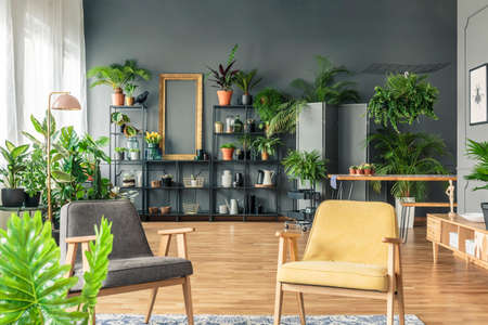 Gray and yellow armchair in spacious living room interior with plants on metal rack against black wall