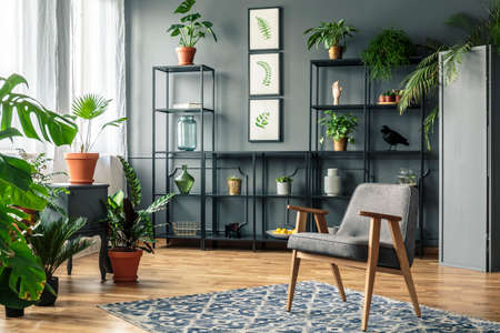 Elegant, gray living room interior with plants on metal racks standing against dark wall with molding behind a vintage armchair Stock Photo