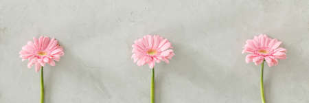 Three pink fresh flowers placed separately on bright grey wall Reklamní fotografie