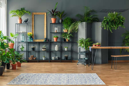 Tropical apartment interior with many plants, dark walls with molding, wooden table and bench