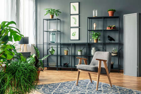 Gray armchair on patterned rug in dark and elegant living room interior with plants on a metal rack Stock Photo