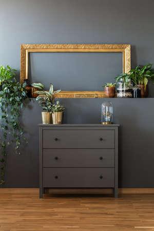 Various potted plants and a luxurious golden empty frame above a dark gray scandinavian style dresser in stylish living room interior