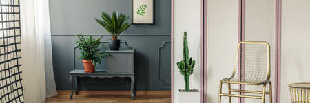Gold chair standing in front of a screen with a cactus next to it and grey cupboard with plants standing against a wall with drawing in dark room interior