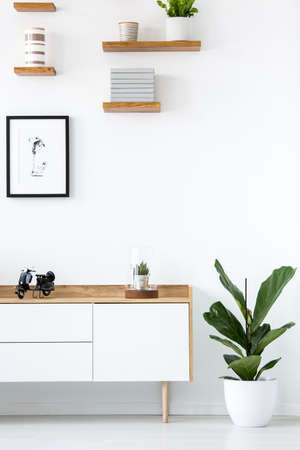 Plant next to wooden cupboard against white wall with poster in simple interior. Real photo