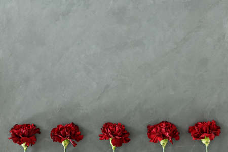 Red flowers against grey background with copy space. Woman's day card concept