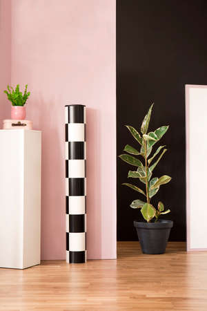 Ficus next to a roll of checkerboard paper and white pedestal with plant in pink studio interior