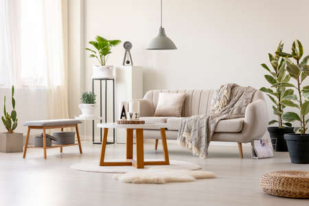 Real photo of a beige sofa with a cushion and a blanket standing in front of a table and under a lamp in a living room interior with plants and decorations Stock Photo