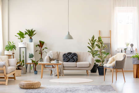 Real photo of a botanic living room interior full of plants with a grey couch standing behind a wooden table and under a lamp, with two chairs on the opposite sides of the room Stock Photo