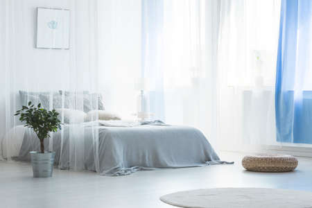 Pouf and plant near canopy bed in simple white and blue bedroom interior with rug. Real photo Banco de Imagens