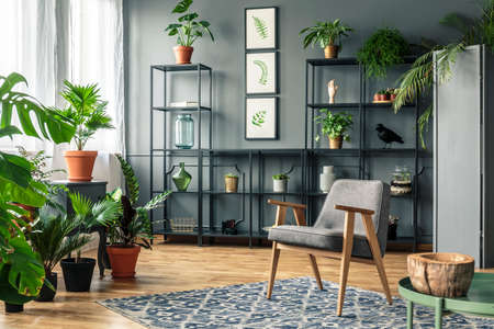 A chair on a patterned rug in a botanic room interior full of plants on a wooden floor and on the black shelves Stock Photo