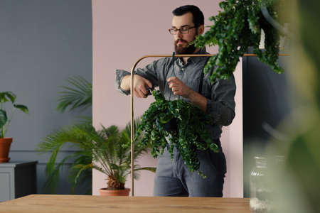 Gardener with beard cutting leaves of a plant in the orangery Stock Photo